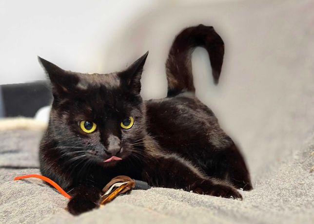 Чорна кішка Греція шукає дім, 1 рік (стерилізована)