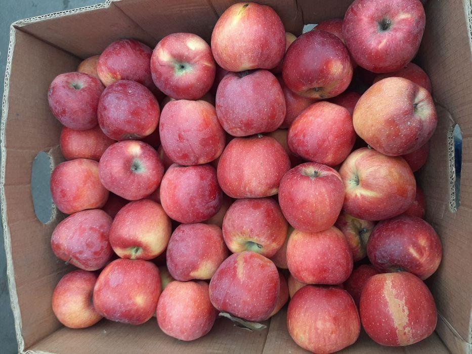 Свіжі яблука. Яблуко. Бровары - изображение 1