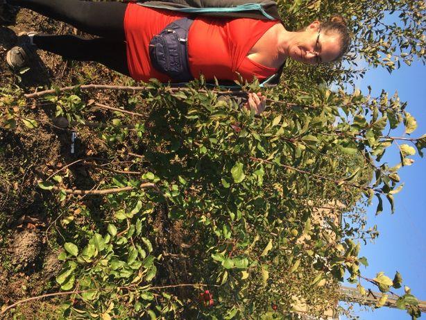 Jabłoń czereśnia grusza morela wiśnia agrest porzeczka i inne owocowe