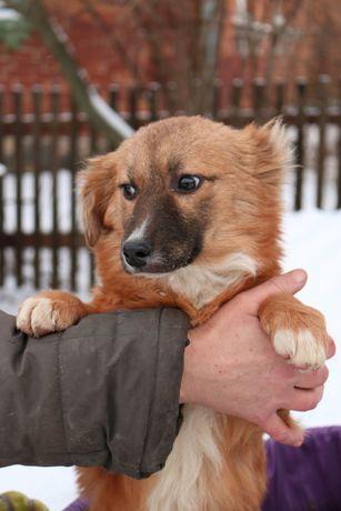 В добрі руки собачку
