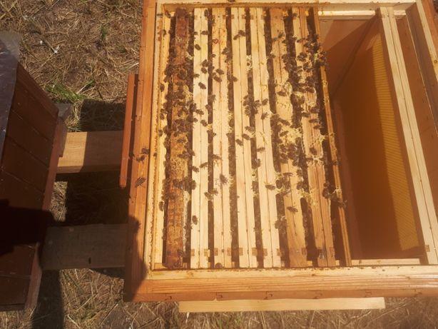 Odkłady pszczele 2021, Sklenar, Nieska lub Alpejka, ramka Dadanta