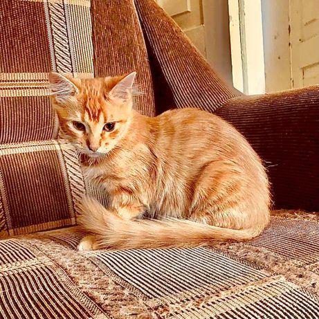 Милые рыжие котята ищут дом