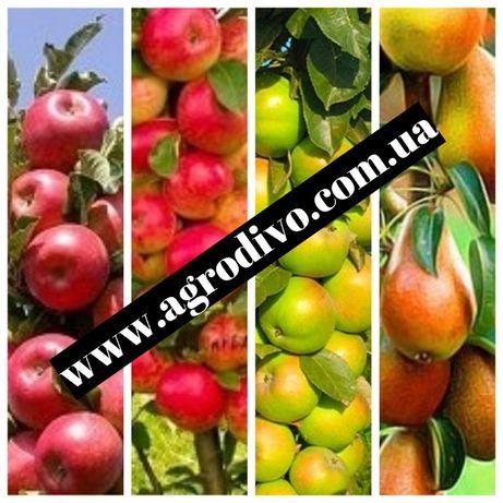 фундук,нектарин,яблони,груши,сливы,абрикосы,черешни на Agrodivo.com.ua