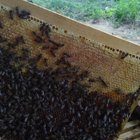 Продам мед без ГМО