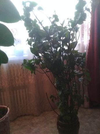 Цветок 400 рублей.