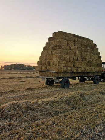 Słoma pszeniczna 4zl kostka 1000 sztuk sucha, bez chwastow, pszenica