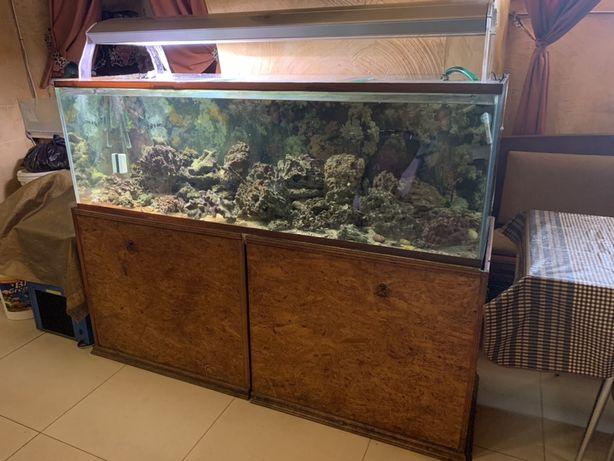 Продается морской аквариум недорого