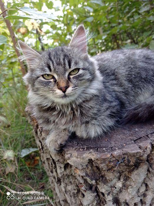 Отдам котят в добрые руки. Никополь - изображение 1