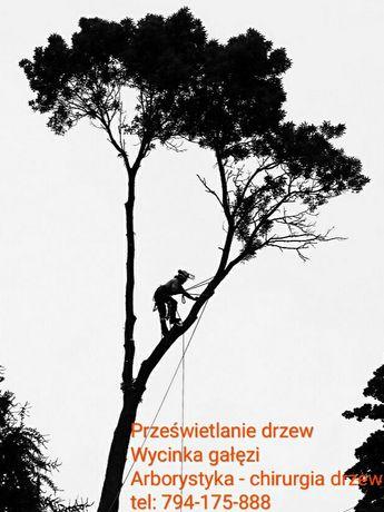 Wycinka gałęzi Usuwanie drzew Pielęgnacja Dostęp linowy Trudny dostęp