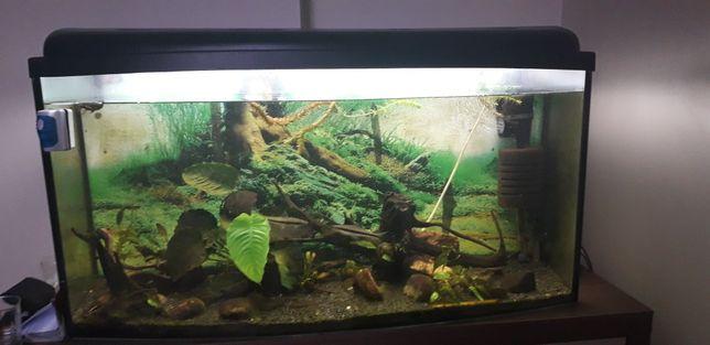 Akwarium panoramiczne 180l