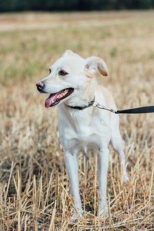 Потерялась собака, девочка, стерильна, Мирное-Рогозов!