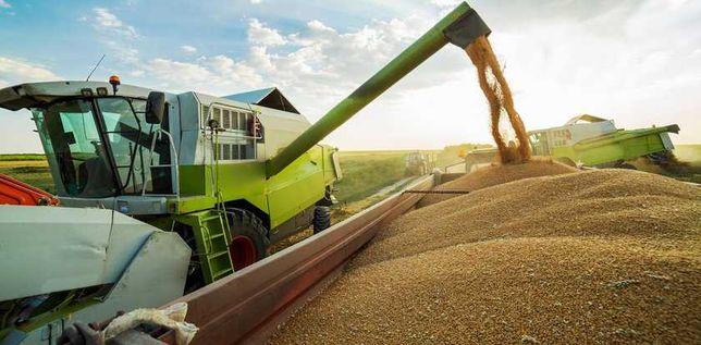 Skup zboża pszenżyto pszenica jęczmień żyto kolejna zmiana cen w górę