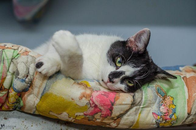 Pepsi - młoda, towarzyska kotka; dla rodziny z dziećmi i zwierzętami