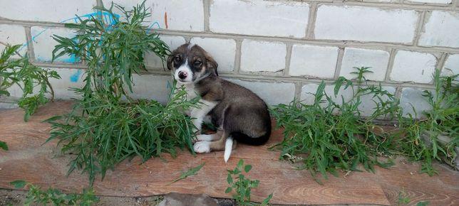 Срочно ищут дом щенята