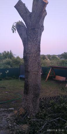 Ствол дерева орех