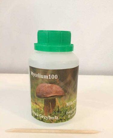 Żywa Grzybnia,Mycelium100 Podgrzybek brunatny 70 aplikacji.