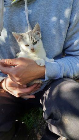 Віддам котика у добрі руки