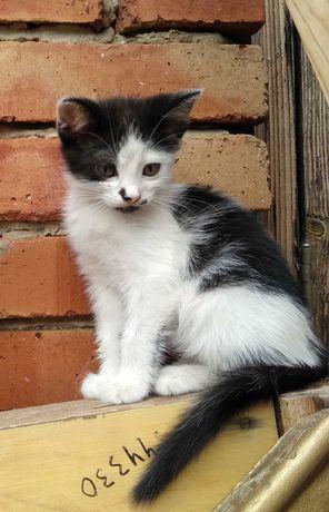 Котёнок  в добрые руки, котик 2 месяца