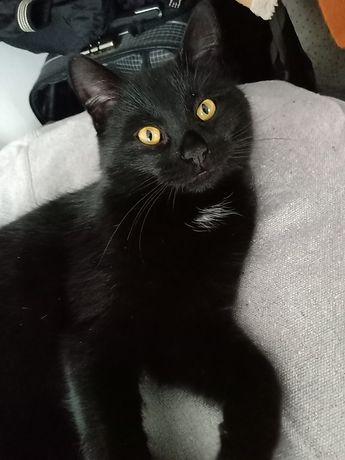 Znaleziono młodego, czarnego kota