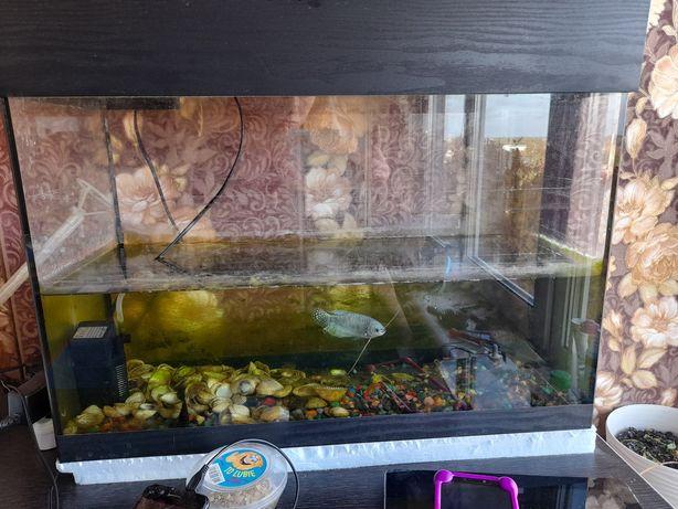 Великий акваріум для риб