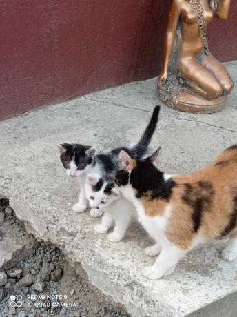 Віддам кошенят в добрі руки