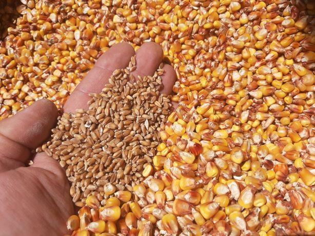 Кукурудза пшениця с доставка ячмінь зерноотход пшеницы кукуруза