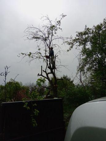 wycinka drzew wywóz gałęzi odpadów zielonych