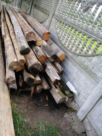 Belki drewniane, drzewo
