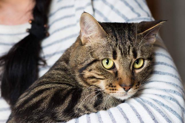Нежнейший котик в поисках мам-пап