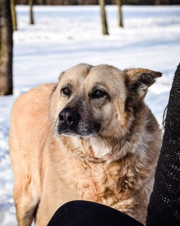 Tadek porzucony pies, szuka kochającej rodziny której może zaufać :)