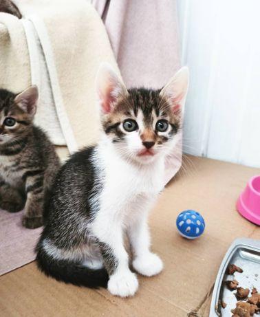 Котёнок, котёнок мальчик, котик в добрые руки