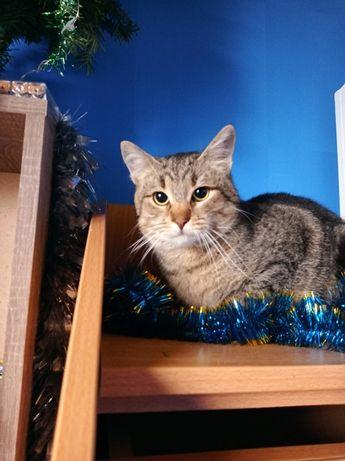 Умный добрый полосатый кот 1 год