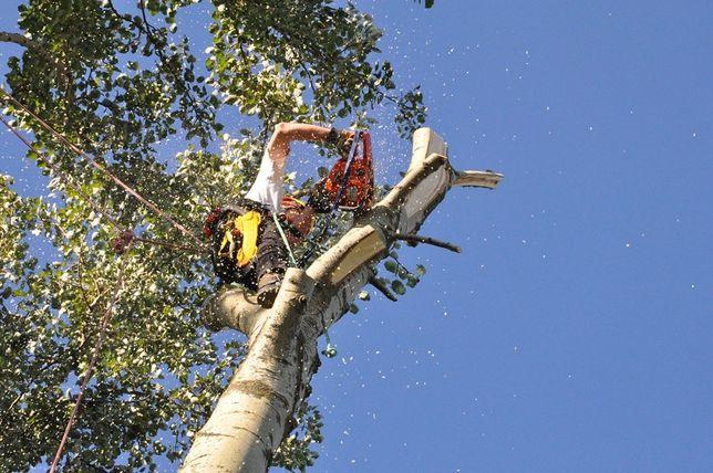 Wycinka drzew, rębak, pielęgnacja ogrodu, koszenia, koszenie trawików