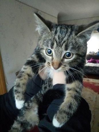 Котята шести месяцев только заботливым хозяевам