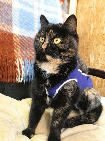 Нежная черепаховая кошечка Джели ищет семью! кошка кот котенок