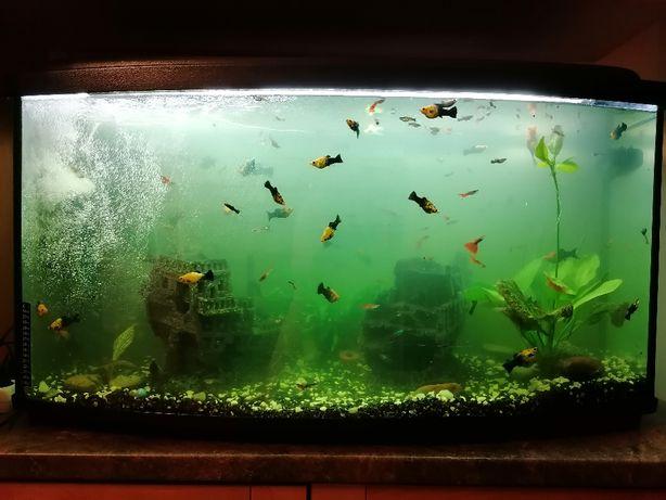 Akwarium+rybki+ozdobny statek+dwa akwaria gratis!!!