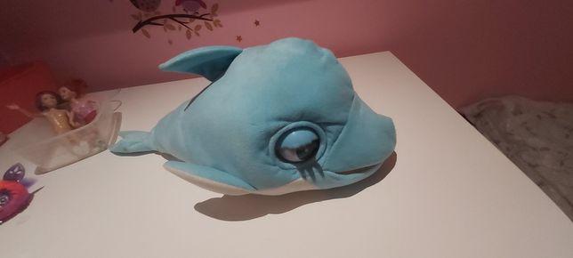 Delfin Blu blu wydający dźwięki