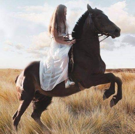 Конные прогулки в лес, поле или по манежу