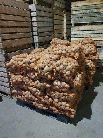 Ziemniaki krajowe
