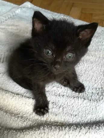 Котенок крошка ищет дом