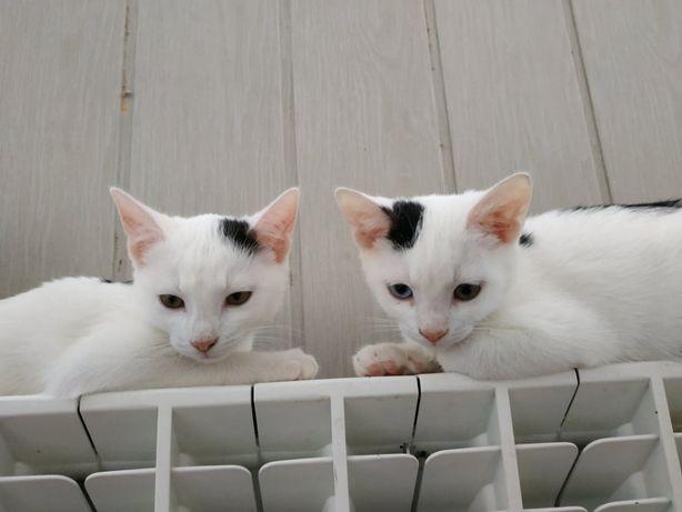 3 śnieżne koteczki do pokochania