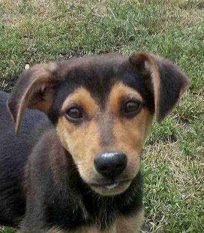 Щенок Майя, 4 месяца, собака