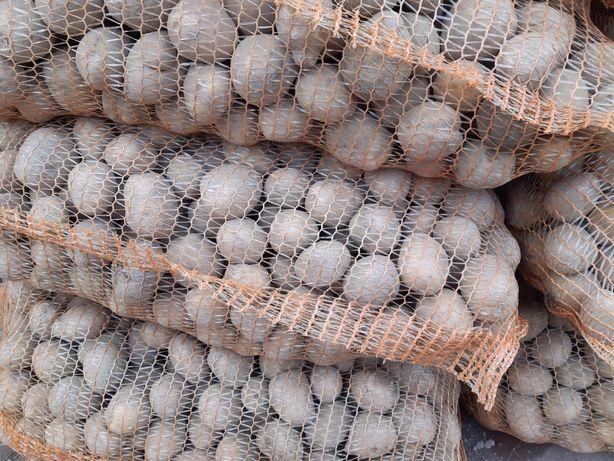 Ziemniaki Wineta Vineta sadzeniak
