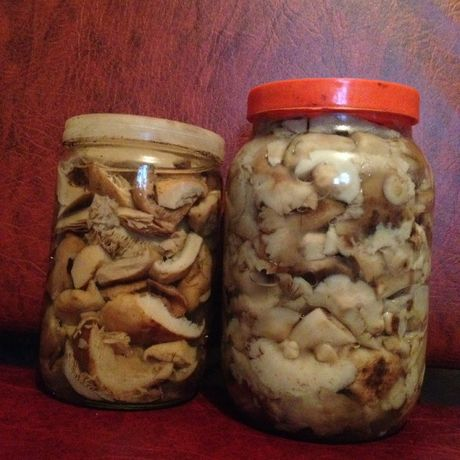 Продам грибочки грузди, майская рядовочка садовая, сыроежки