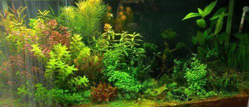 Zestaw roślin akwariowych OKAZJA REZERWACJA