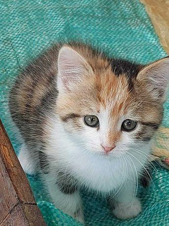 Котята_кошка_ Отдам_малышку_ 6 мес_стерилизована