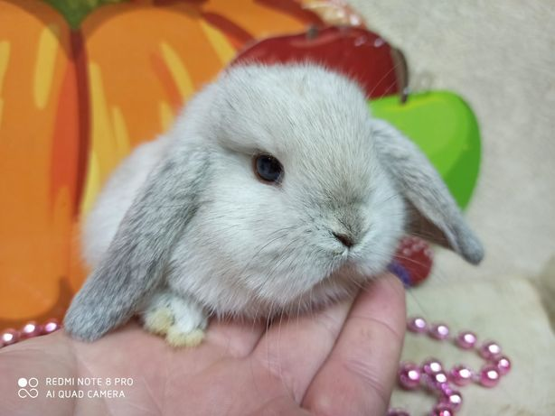 Питомник карликовых кроликов `BAMBY`