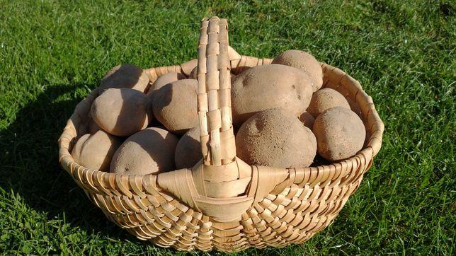 Ziemniaki Jurek konsumpcyjne i paszowe
