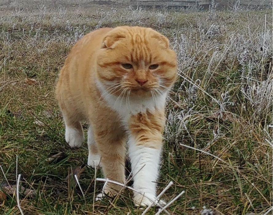 Пропал Рыжий котик район Краснополья