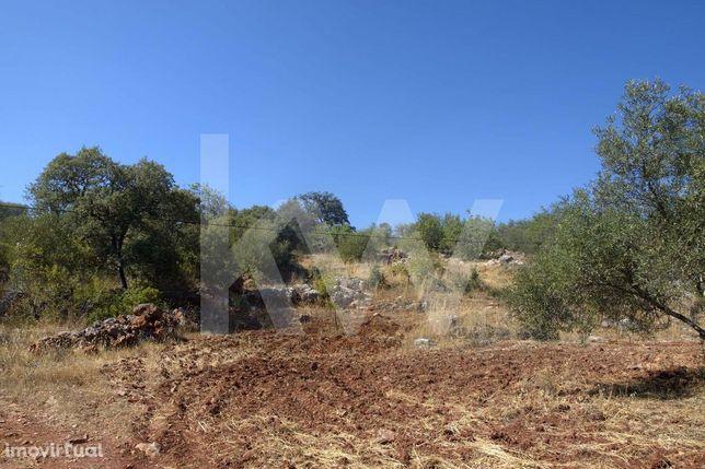 Terreno rustico, situado na estrada entre Salir e Benafim, com uma bon